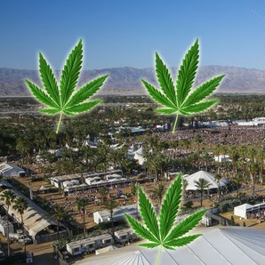 Coachella site 2015 with marijuana leaves
